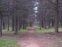 tupido pinar