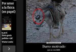burro motivado
