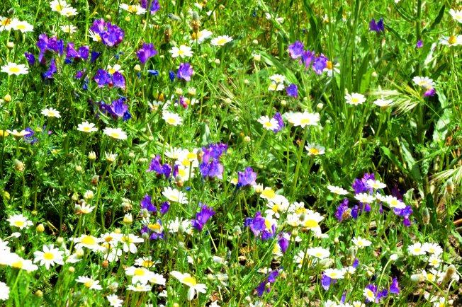 Flores para Ana